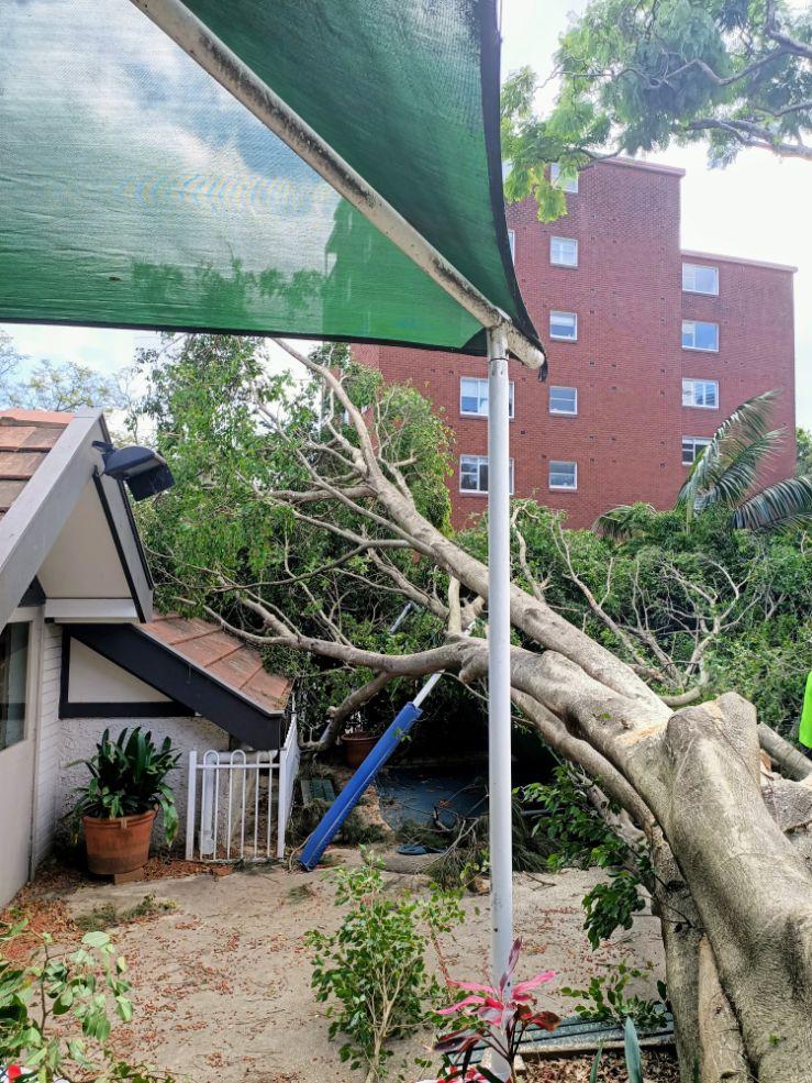 Torn down tree