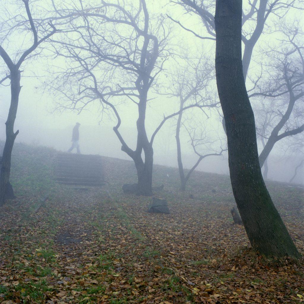 Canopy Consulting - Arborist