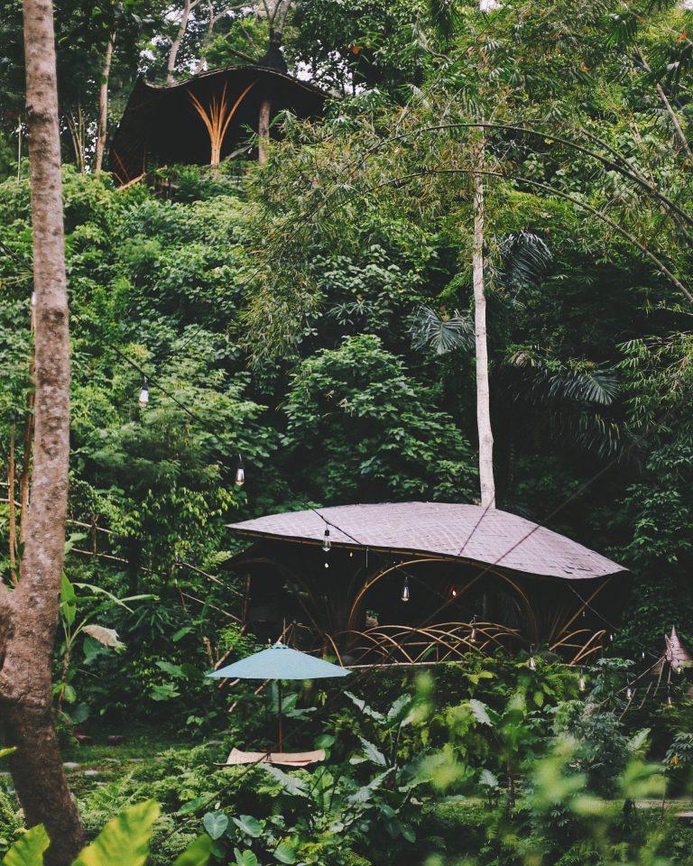 Canopy Consulting - Arborist Tree Report